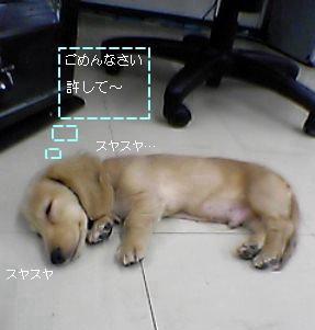 カミューの寝顔
