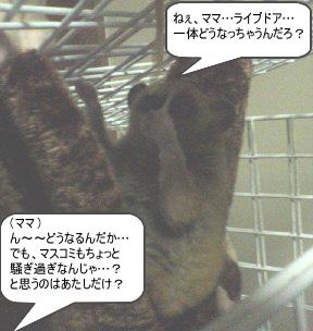 200601244