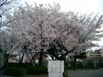 200603312