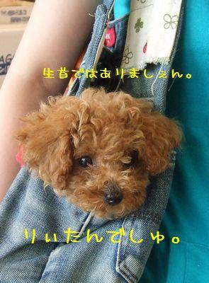 003_20080830210944.jpg