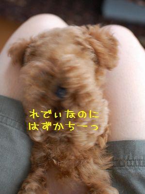 035_20080818190142.jpg