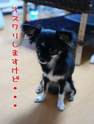 107_20080822220326.jpg