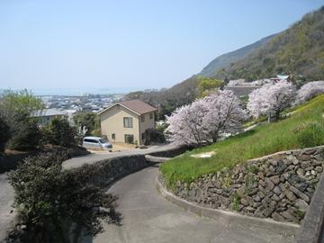 ooyabu0904-1.jpg