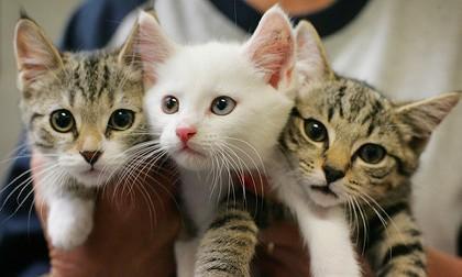 猫の登録制