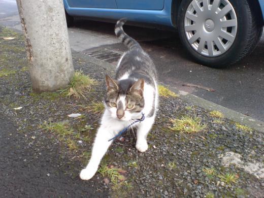 オールダムのネコ2