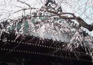 hongakuji1.jpg