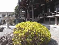 hongakuji4.jpg