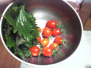 ベランダ菜園のトマトと青紫蘇