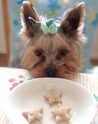 豆乳入りクッキー