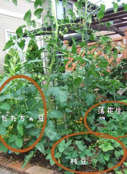 菜園の様子