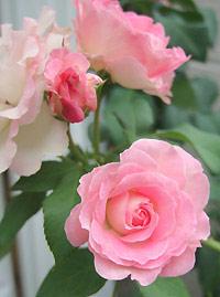 9月の花びら