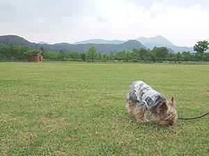 七ヶ宿公園 芝生