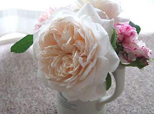 クロッカスローズ 花瓶