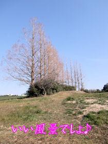散歩コース1
