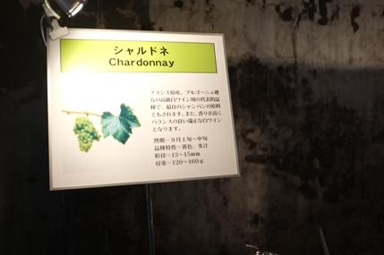 20111109_tomi3_15