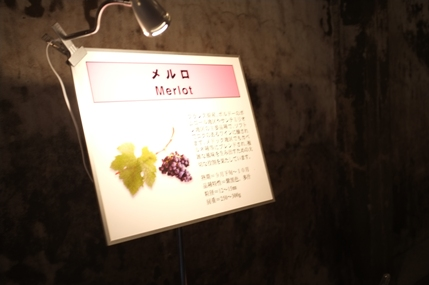 20111109_tomi3_16
