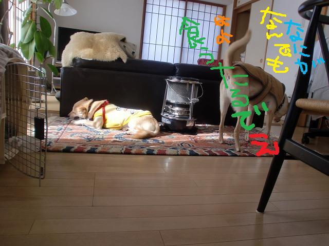 028_20120126235440.jpg
