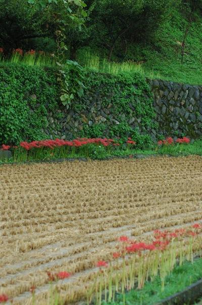 雨の大原7