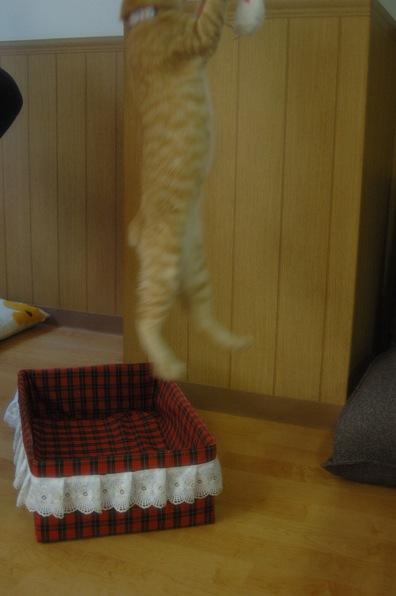 猫カフェ ねこ会議1