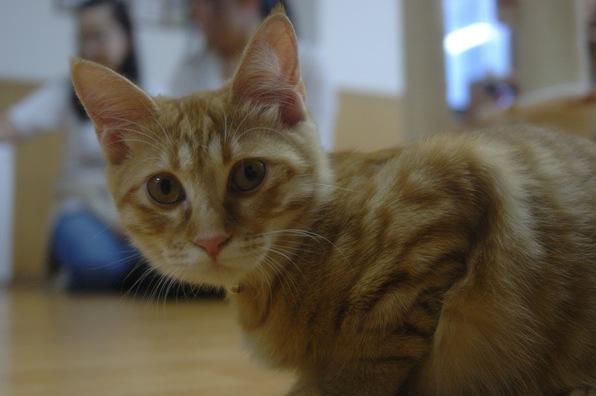 猫カフェ ねこ会議7