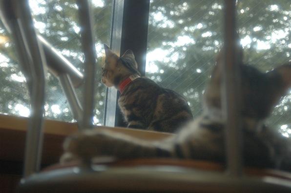 猫カフェ ねこ会議8