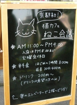 猫カフェ ねこ会議b