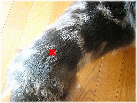2008-10-08-02.jpg