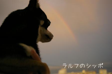 虹をバックに6