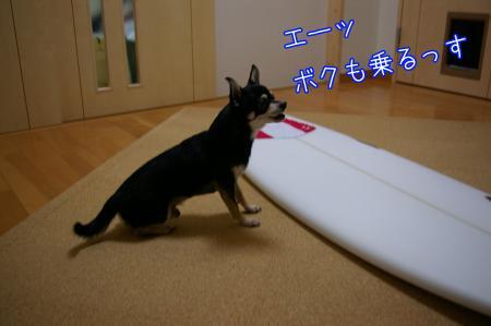 サーフィン犬2