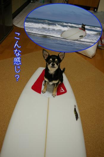 サーフィン犬3