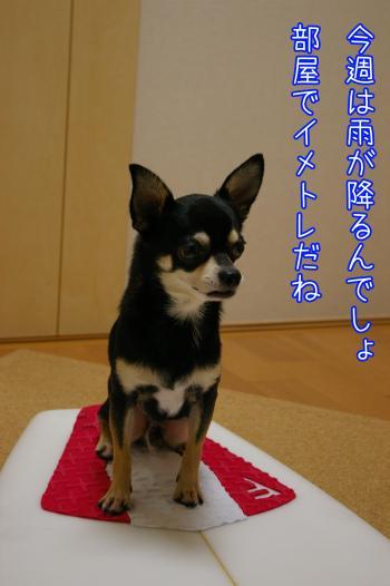 サーフィン犬4