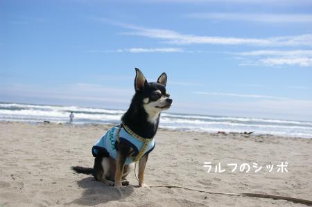 サーフィン犬5