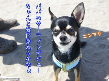 サーフィン犬6