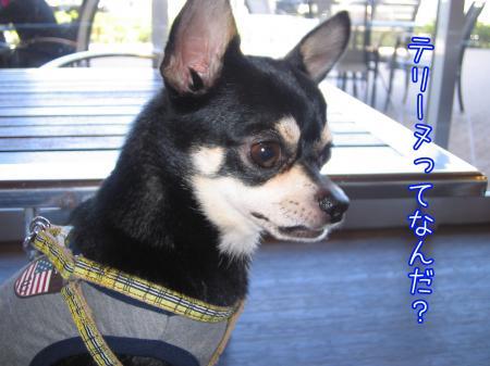 ステキカフェ《Dog Garden Cafe》3