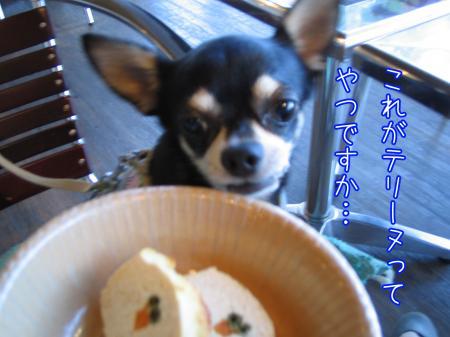 ステキカフェ《Dog Garden Cafe》6