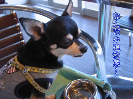 ステキカフェ《Dog Garden Cafe》8