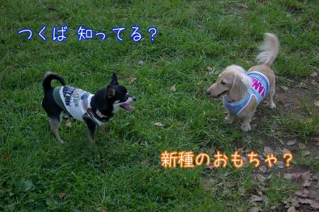 昭和記念公園で大暴れ4