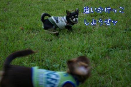 昭和記念公園で大暴れ7