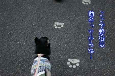 昭和記念公園で大暴れ9