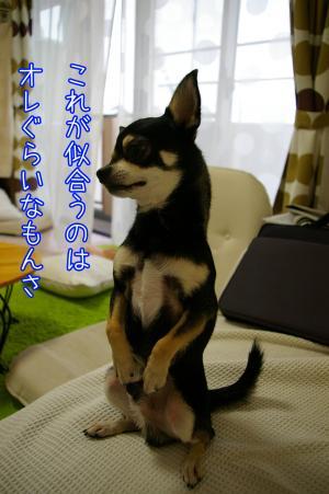モヒカン犬5