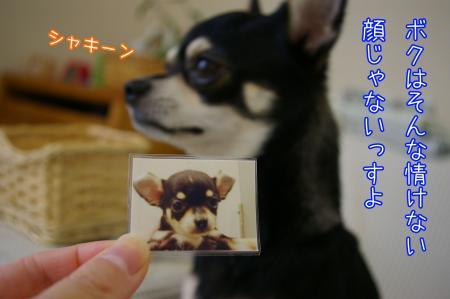 耳がペロン4