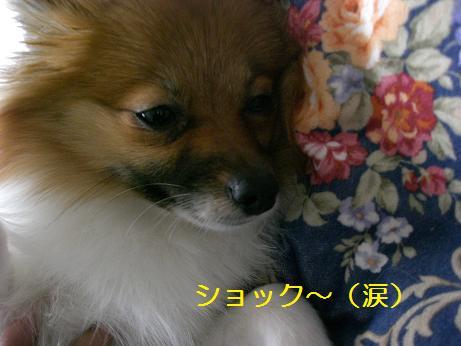 71_20100112204044.jpg
