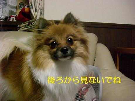 73_20100112204043.jpg