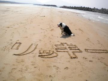砂浜にリッキー2