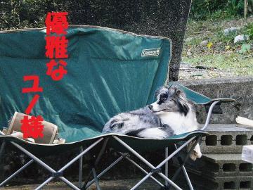 2009蟷エ05譛・1譌・_DSCN1019_convert_20090603225140ユノ様2