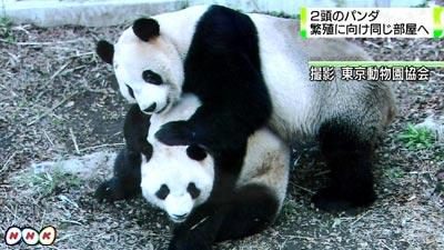 0327_panda_02_panda.jpg