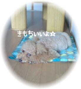200809110955001.jpg