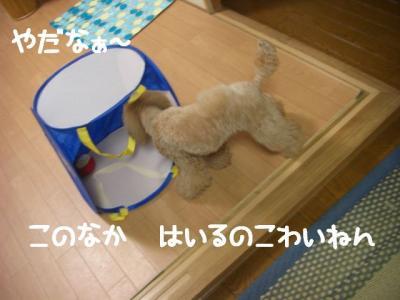 CIMG4738.jpg