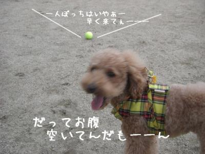 CIMG4773.jpg