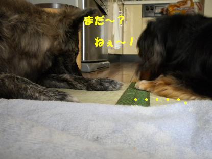 犬 020-1